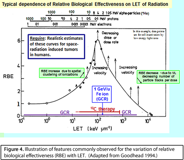 Illustration of features commonly observed for the variation of relative biological effectiveness (RBE) with LET.  (Adapted from Goodhead 1994.)