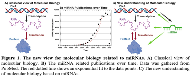 The new view for molecular biology related to miRNAs. A) Classical view of molecular biology. B) The miRNA related publications over time. Data was gathered from PubMed. The red dotted line shows an exponential fit to the data points. C) The new understanding of molecular biology based on miRNAs.