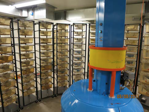 Interior view of the facility showing the neutron irradiator (blue with yellow attenuator) surrounded by racks hold mouse and rat cages.